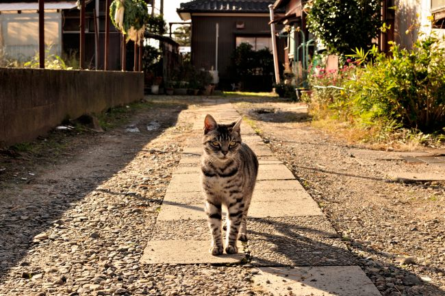 aki2012-07.JPG