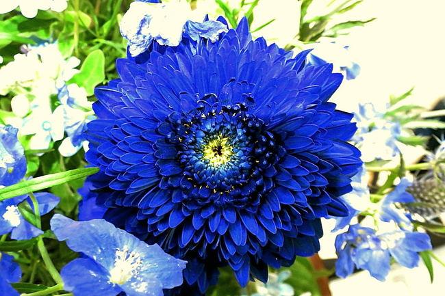 blueflower01.JPG