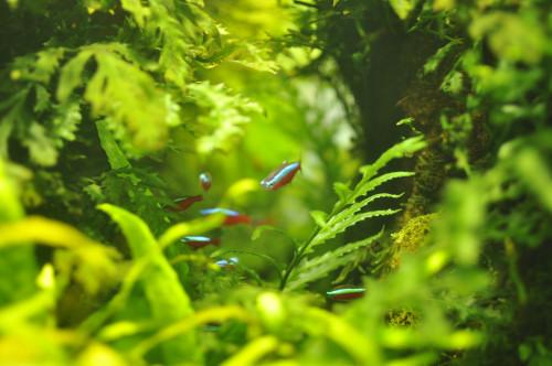 fish08.JPG