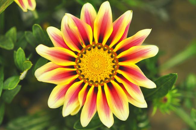 flower10061703.JPG
