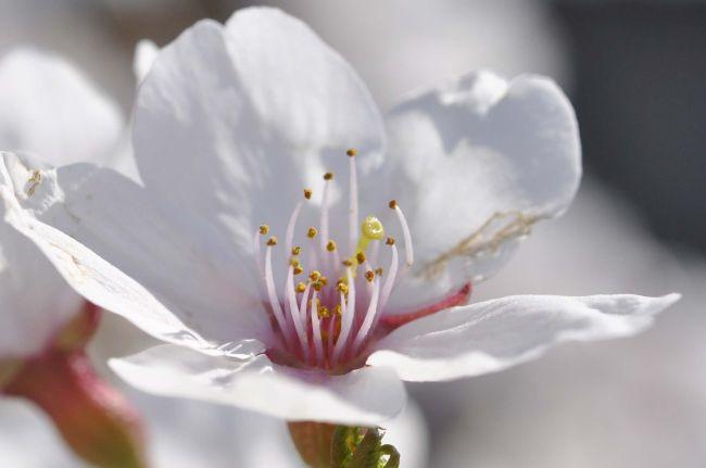 flower1104-01.JPG