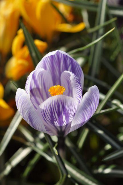flower1104-03.JPG