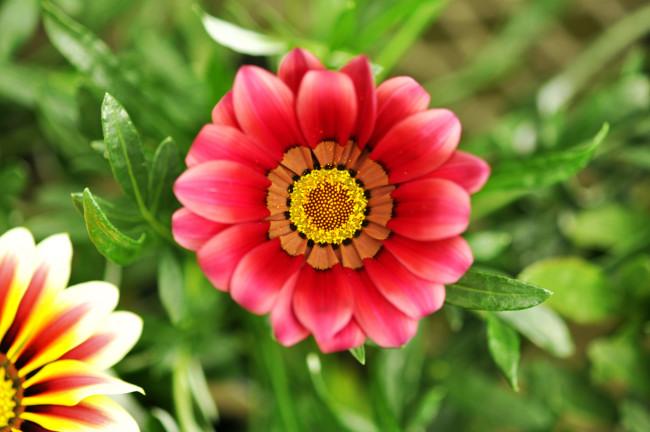 flower20100602.JPG