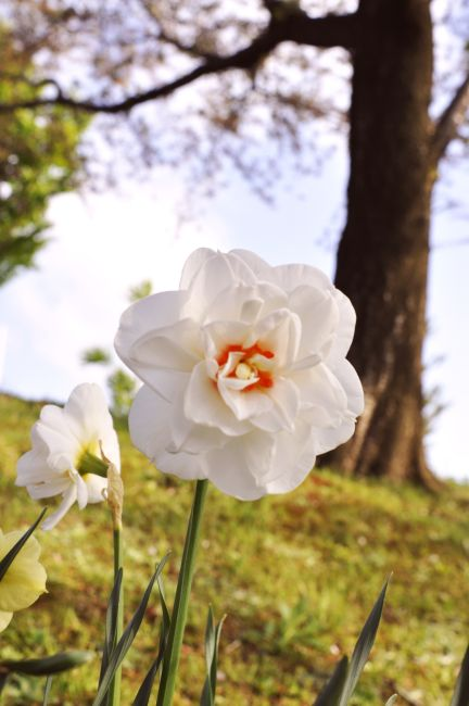 flower20110518.JPG