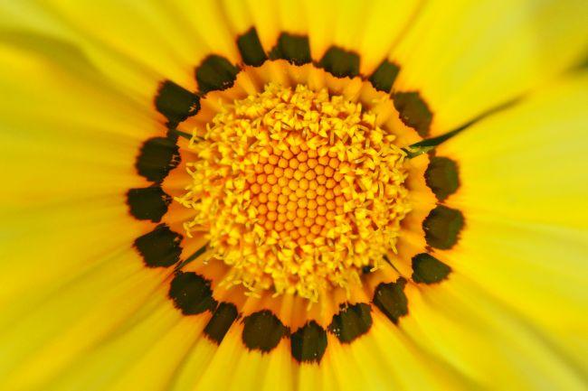 flower20110528.JPG