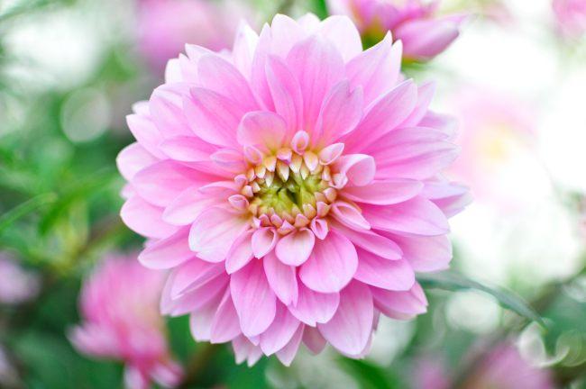 flower201211-01.JPG