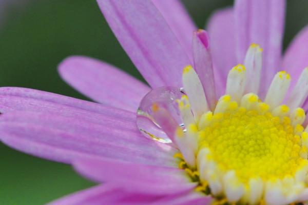 flower2202.JPG