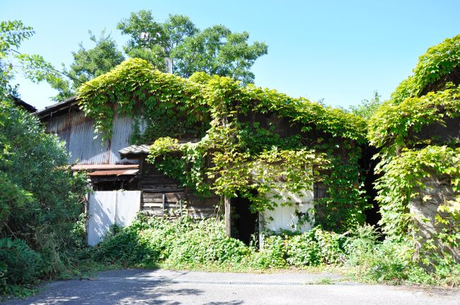 foresthouse01.JPG