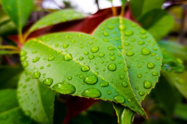 leaf201508-01.JPG