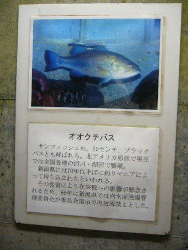 minato11.jpg