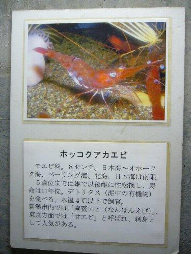 minato12.jpg