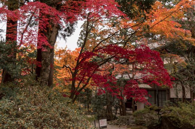sekiyunosato2014-112.JPG
