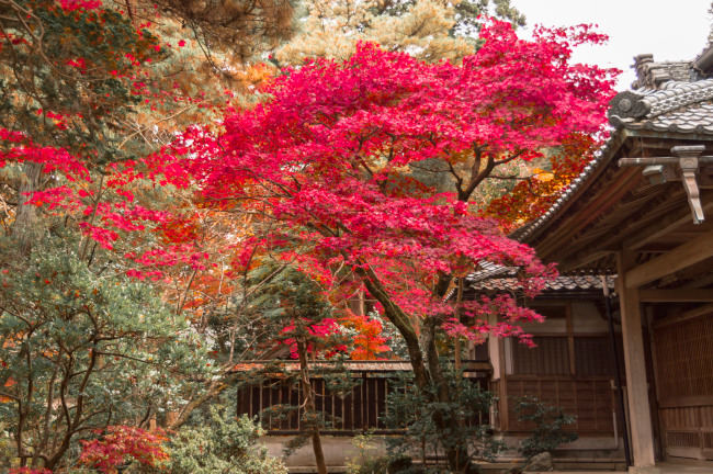 sekiyunosato2014-126.JPG