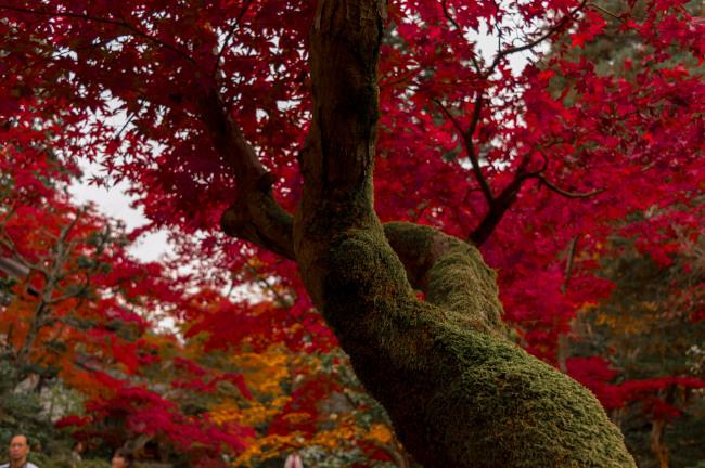 sekiyunosato2014-156.JPG