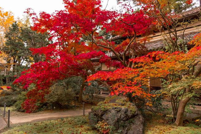 sekiyunosato2014-166.JPG