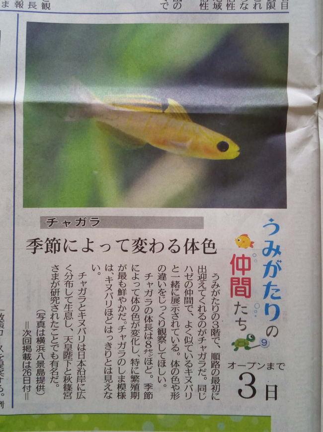 umigatari_002.JPG